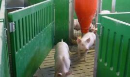 Pig Pen Door plastic sandwich venti panels Paneltim