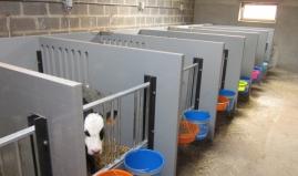 Calf boxes plastic venti panels Paneltim