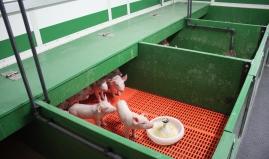 Piglet nursery plastic sandwich panels Paneltim