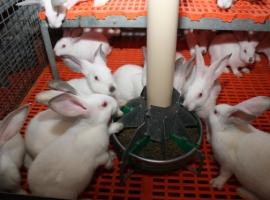Paneltim Plus slats ideal for housing for rabits in rabbit hutch