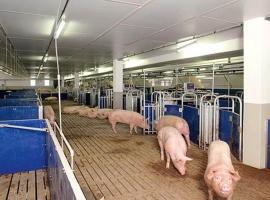 Group housing barn for sows in Paneltim plastic sandwich panels