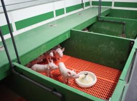 Pig nursery using Paneltim plastic sandwich panels and slats
