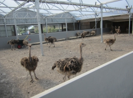 Paneltim panels in ostrich farming